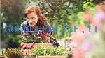 Vivai Flor Plant | Vendita piante all'ingrosso e al dettaglio
