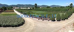 Screenshot_2020-10-09_1_jpg_immagine_JPEG_964__420_pixel_grid.png
