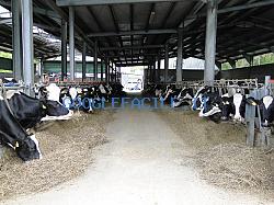 Allevamento Martin | Vacche e Manze di alta Genealogia