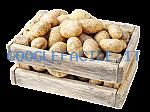 Coppola | Ingrosso patate
