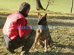Addestramento cani | Centro Cinofilo Arnaldo