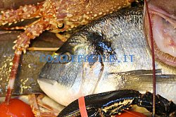 La Selva Pesca   ingrosso pesce