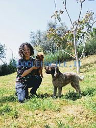 Dog Farm | Pensione cani e gatti, piccoli animali