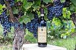 Carpineto Grandi Vini |Azienda vinicola | Tenuta di Montepulciano