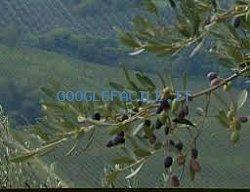 Azienda Agricola Carbonetti | Produzione biologica