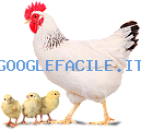 Allevamento   Azienda Agricola Avicola