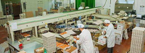 Avicola San Martino | Produzione uova e pastorizzazione