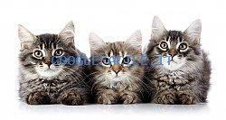 Cat Suite Home | Accoglienza 5 Stelle