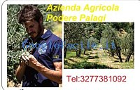 Azienda Agricola Podere Palagi   Produzione e vendita diretta prodotti ortofrutticoli